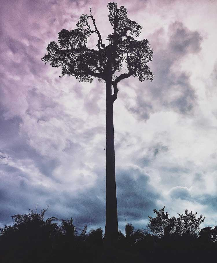 Toog Tree Agusan del Sur