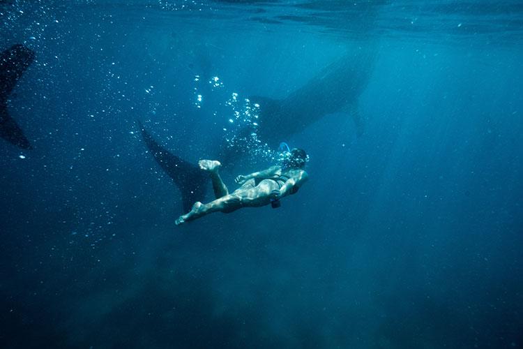 Whale Sharks in Oslob Cebu