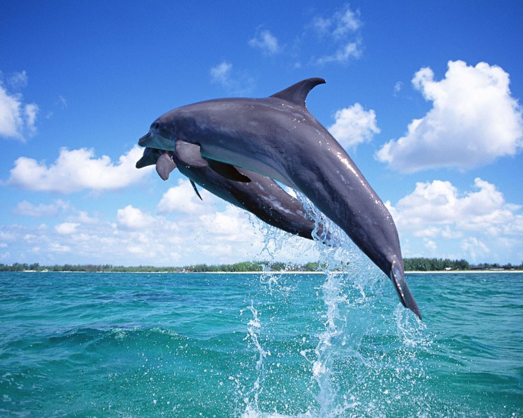 Dolphins at Kisite Mpunguti pic source; ChickAboutTown