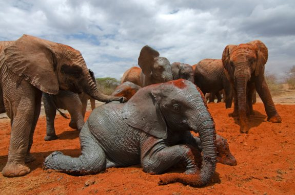 the red elephants of tsavo