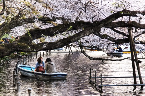 Inokashira Park Photo Images Google