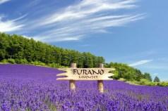 tour jepang sapporo hokkaido furano lavender