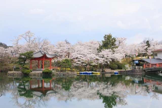taman omoto sakura