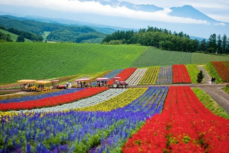 Private Tour Jepang Wisata ke Hokkaido Summer