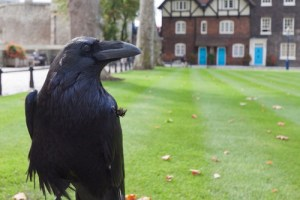 tower of london tour raven