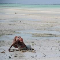 Zanzibar (6)