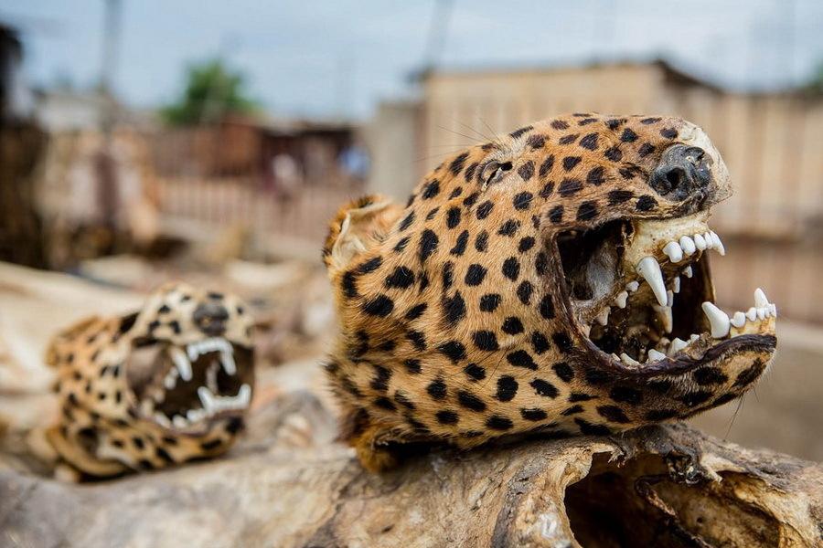 тушки леопардов на рынке