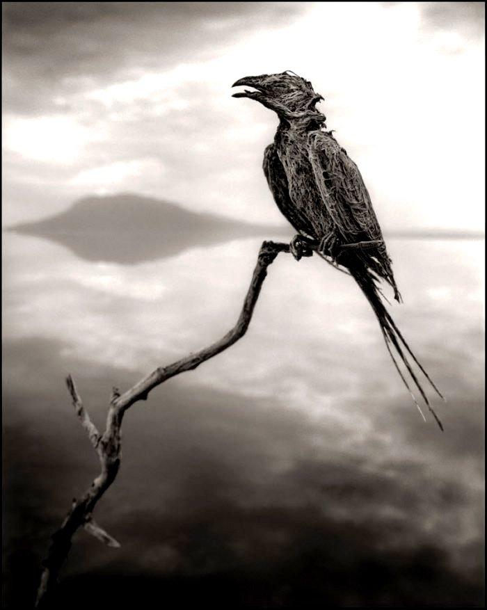 мумия птички