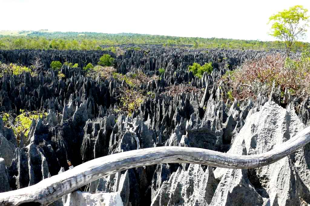 пейзаж каменного леса