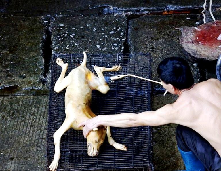 ощипывание собачьей туши