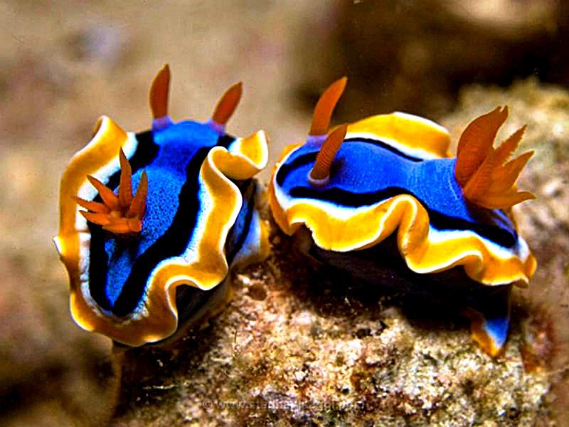 моллюски туббатахи