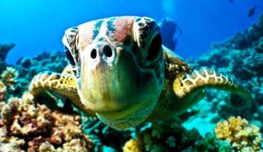 черепаха крупным планом