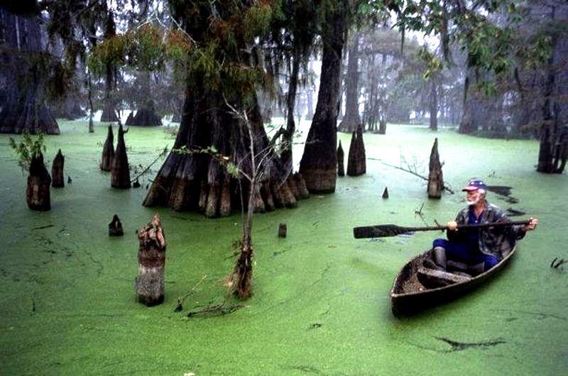 лодка на болоте