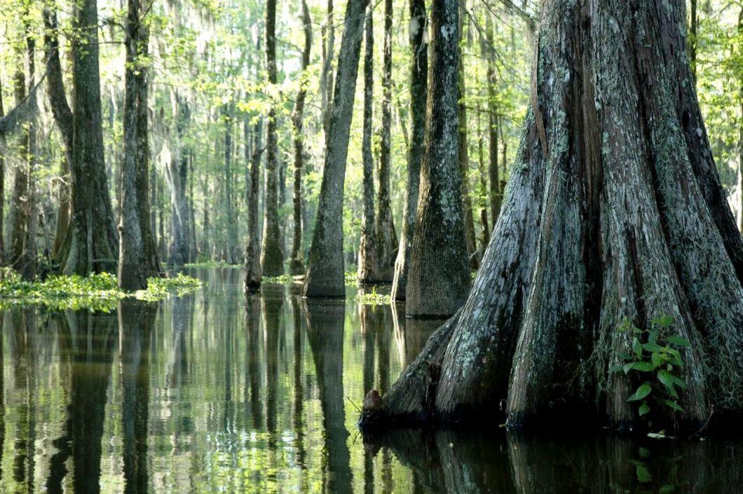 зловещие болота