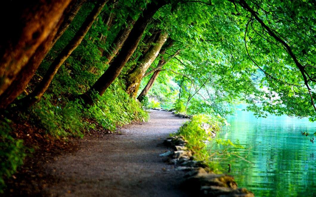 флора плитвицких озер