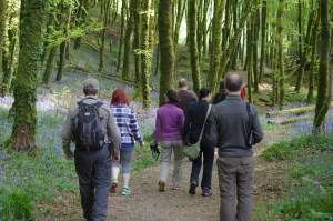 Woodland wildlife walk: West Cork birding and wildlife trips