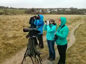 Birdwatching in Ireland