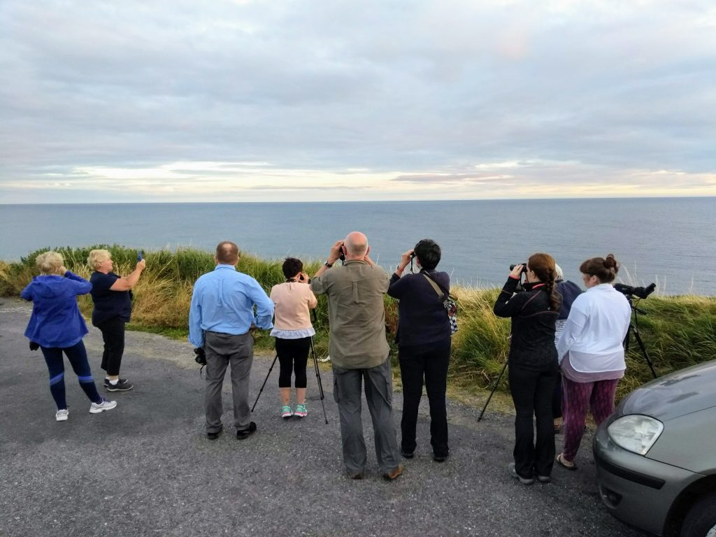 Watching fin whales and humpback whales from shore off Ireland's south coast