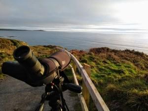 Guided wildlife and birding walk
