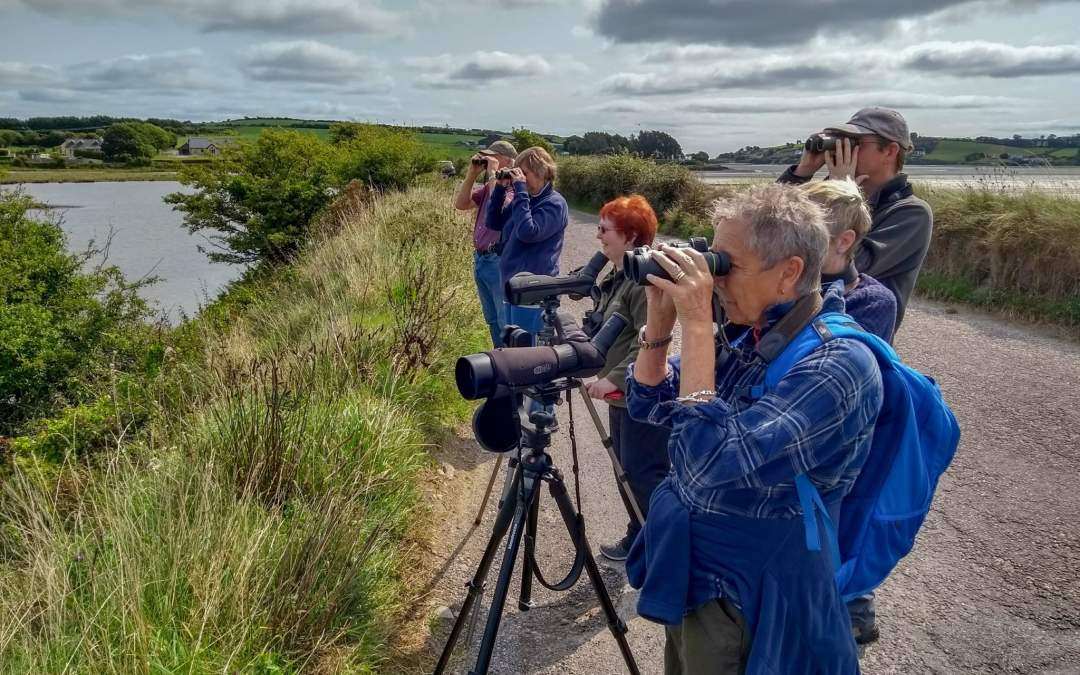 2019 Irish Wildlife and Birding Holidays