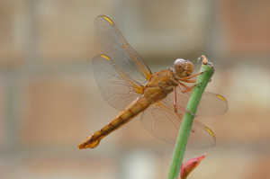 Dragonfly in Ephesus Ancient City