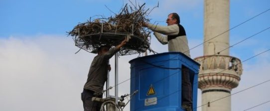 stork nest being repaired in Ephesus