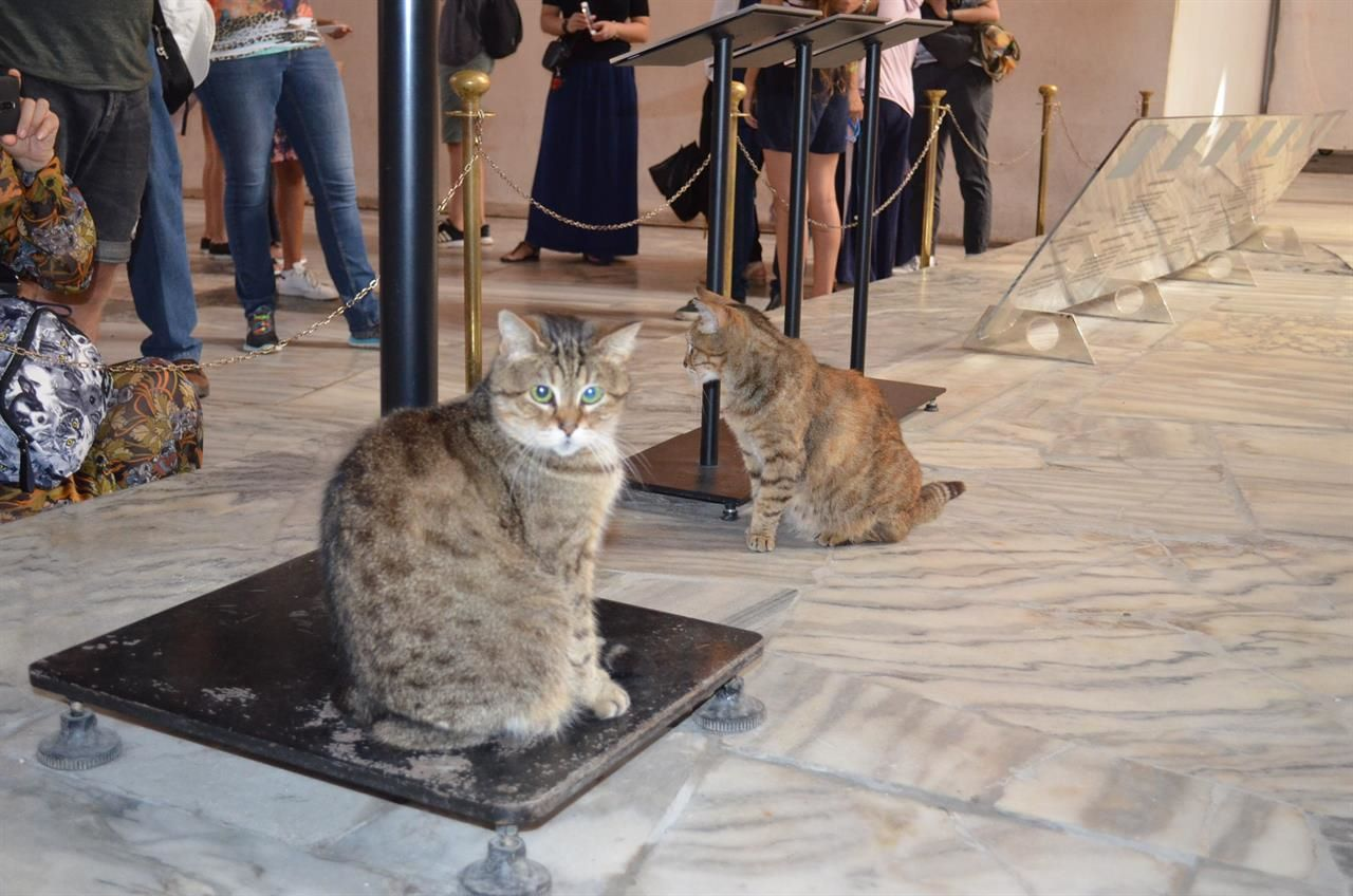 Gli-the-Hagia-Sophia-Cat-7