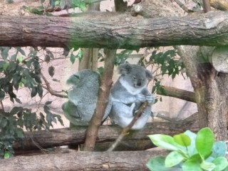 visite  zoo parc beauval serre oiseau
