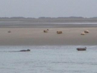 Baie de Somme Marquenterre phoques berck sur  mer