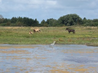 Baie de Somme Marquenterre chevaux