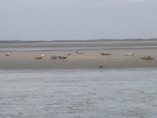 Baie de Somme Marquenterre phoques berck sur  mer veau