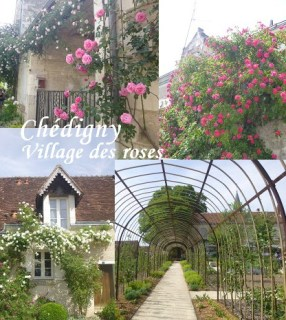 visiter village chedigny rose rosier touraine