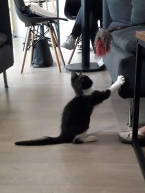 bar à chats Tours adoption chaton