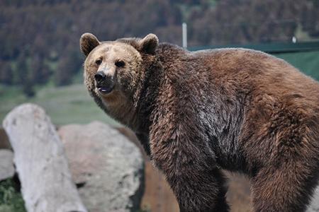 Bear Sanctuary tour