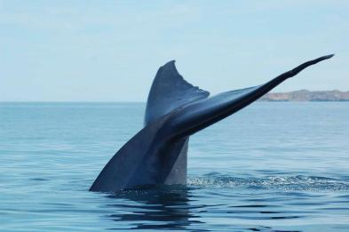 whale watching Loreto Baja California Sur