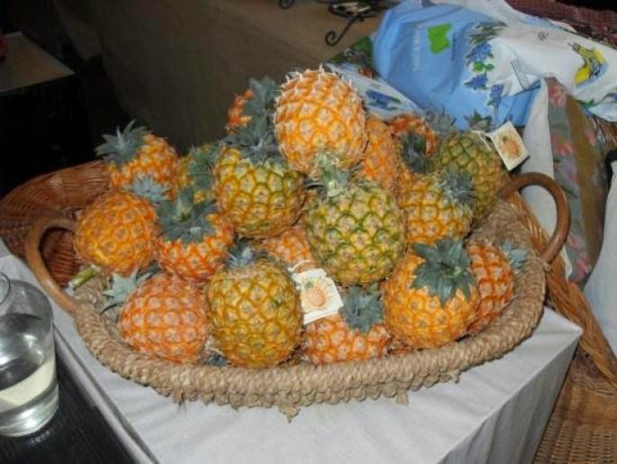 0feb2-arruda-pineapple-plantation