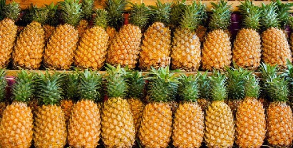 azores pineapple ananas dos acores Portugal