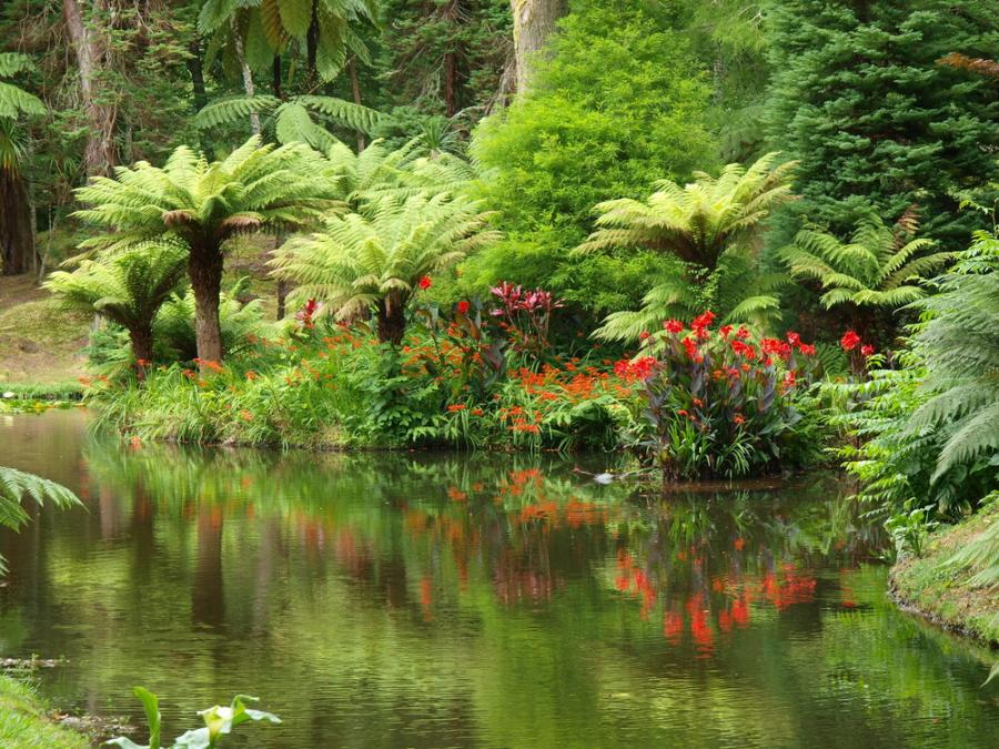 azores flowers and trees in the gardens of furnas on sao miguel island
