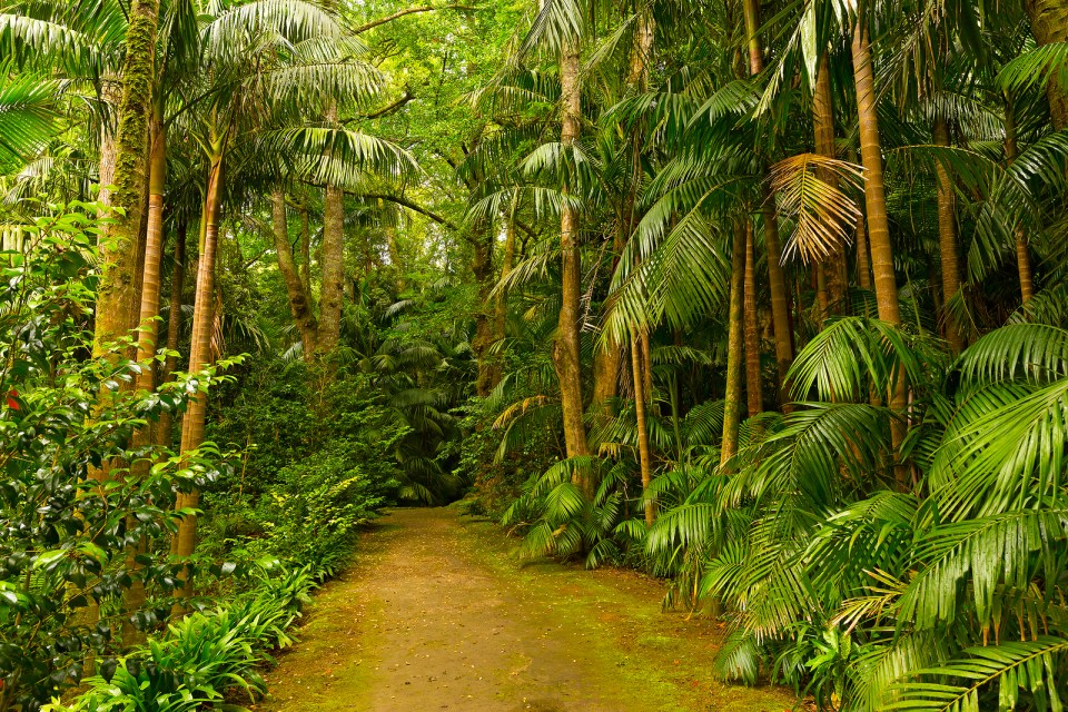 Walking trail through jungle forest in the Azores on Sao Miguel island