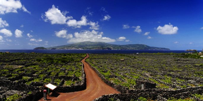 Red Trail Among Vineyard. Azores