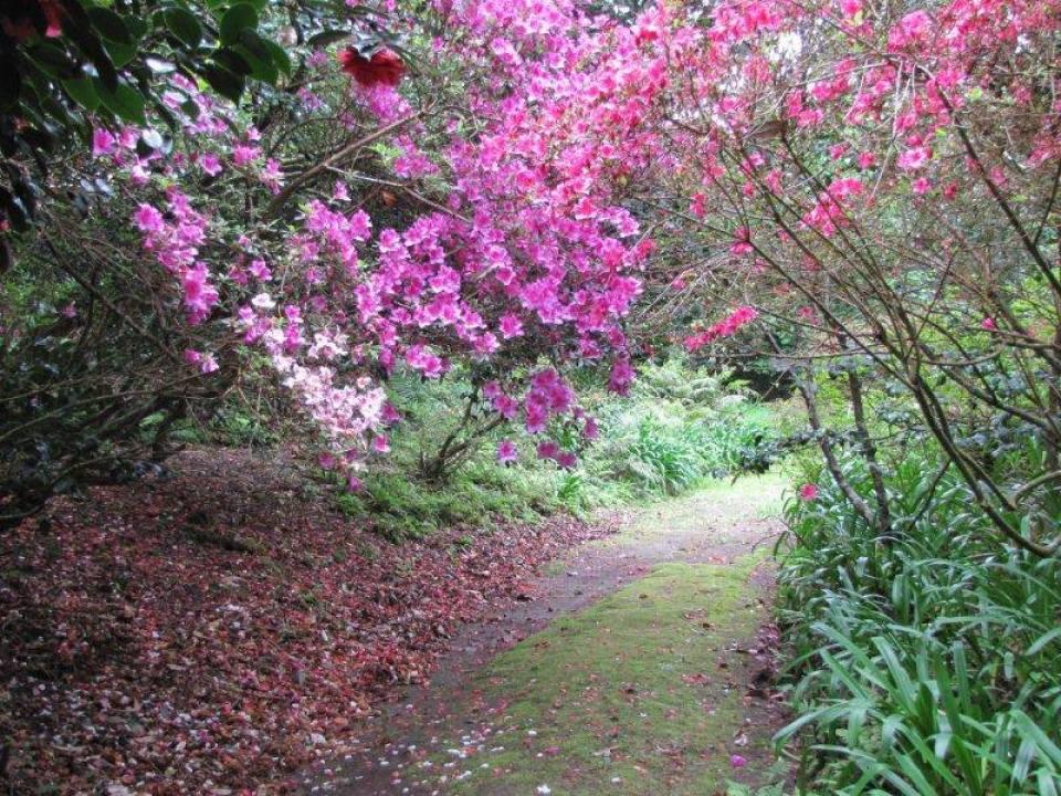 Azores flowers and tree garden ponta delgada sao miguel island