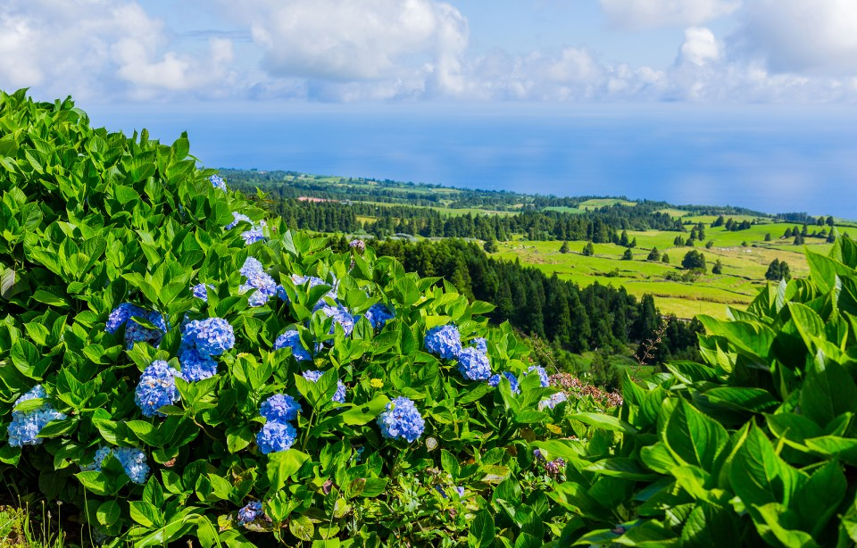 sao miguel island azores tropical nature flowers