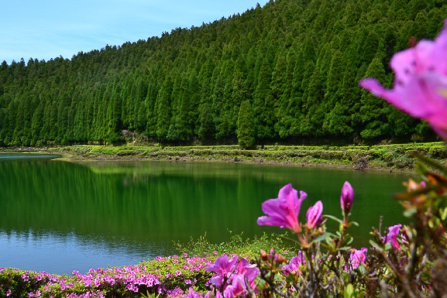 azores trees lakes and flowers in summer sunny weather sao miguel