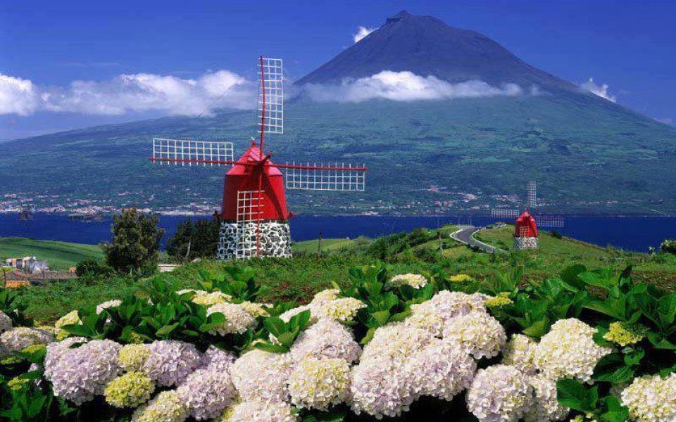 azores windmill pico island hydrangeas faial flowers