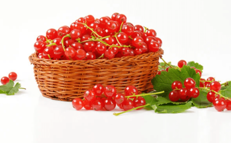 Azores Red Currants Fruit Basket