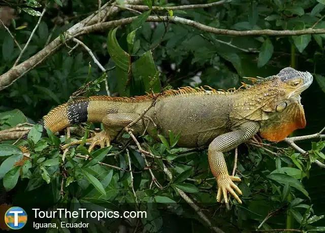 Parque Iguana - atracciones en Ecuador