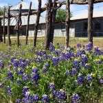 7 Great Ideas for a Family Day Trip to Wimberley