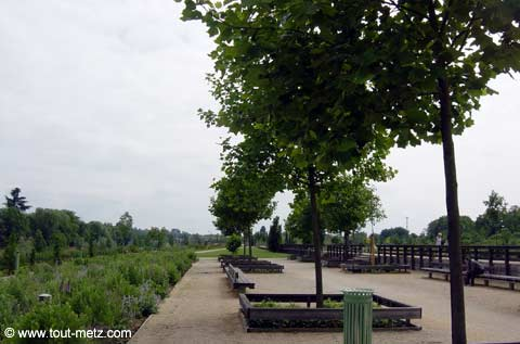 Parc de la Seille à Metz milieu 4