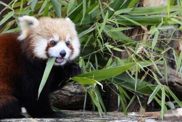 Rhodes : le Parc animalier de Sainte Croix élu zoo préféré des français