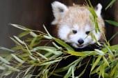 Rhodes : 2017, année record pour le parc animalier de Sainte Croix